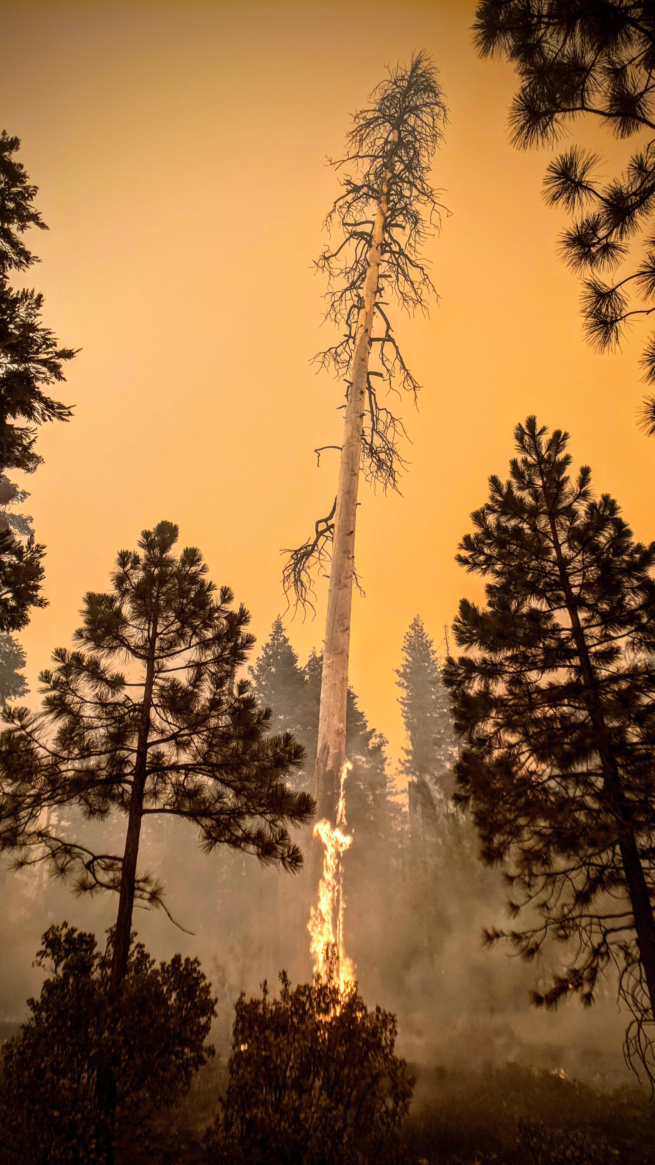 Burning Sequoia National Forest