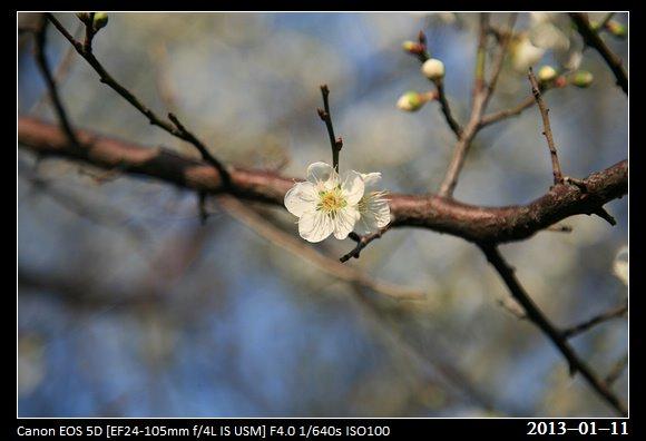 20130111_Flower1
