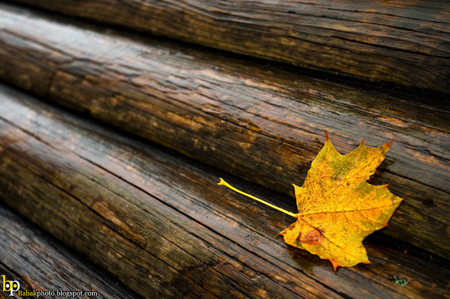 Fall, Nikon D300, Nikkor18-70@44mm, F4.2, 1/60s, Iso200